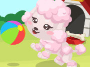 Click to Play Poodle Care