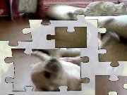 Click to Play Puppy VIDEO Jigsaw